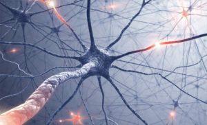 Нервные клетки не восстанавливаются